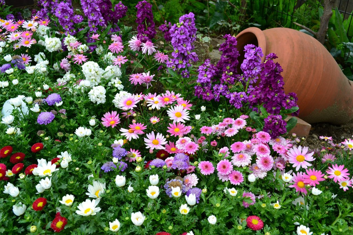 Как выращивать цветы из семян в домашних условиях? Советы по посадке и уходу на ydoo.info