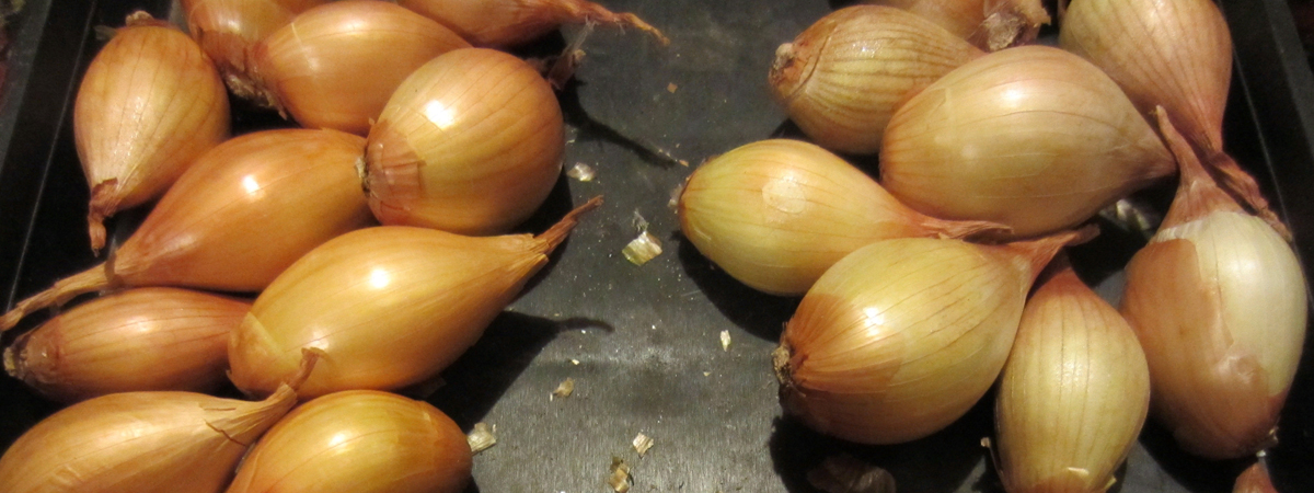 Луковицы шалот