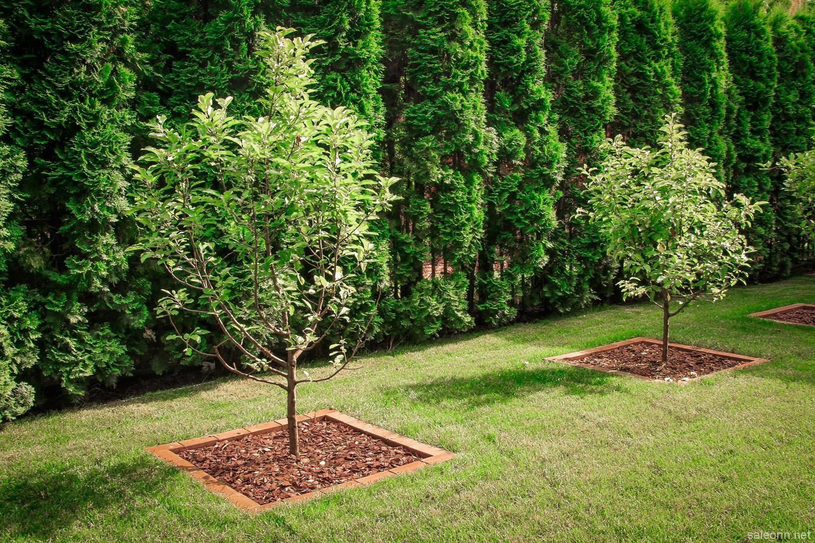 известная как лучше посадить сад фото томас