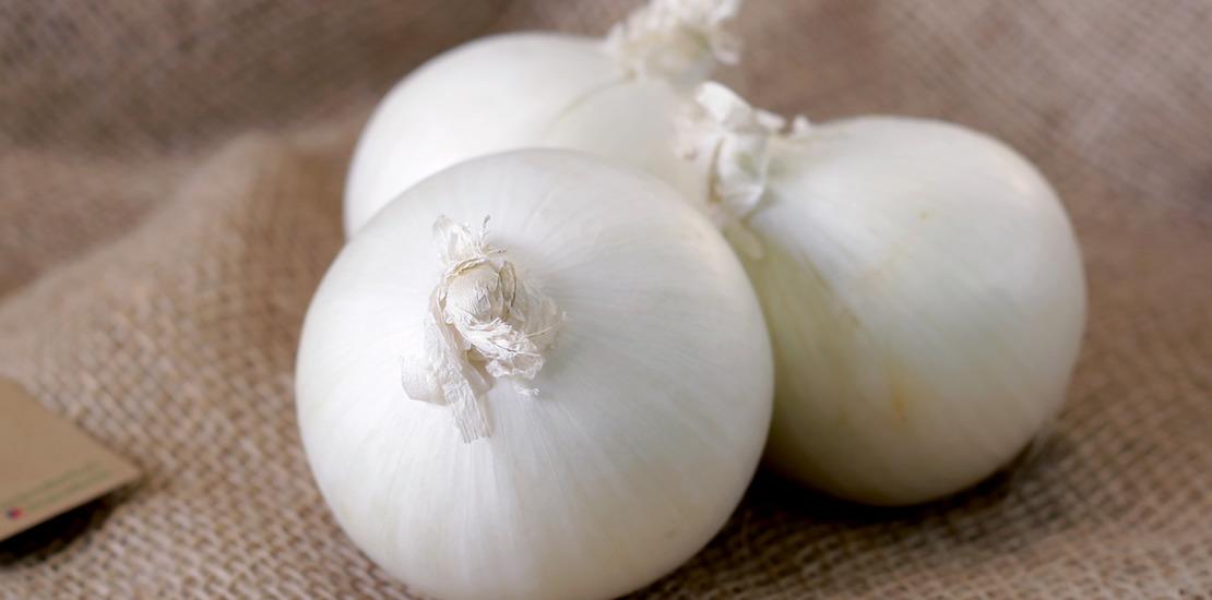 луковица белого лука