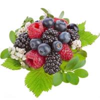 фото ягод на белом фоне