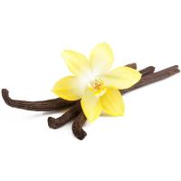цветок и стручки ванили на белом фоне