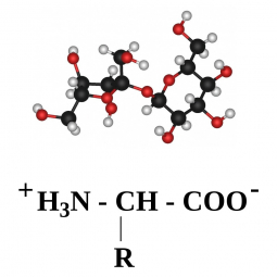 структурная и химическая формула белков