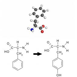 молекула и структурная формула фенилаланина и тирозина на белом фоне
