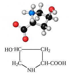 структурная и химическая формула гидроксипролина