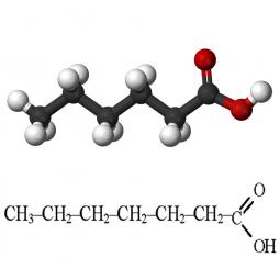 структурная и химическая формула капроновой кислоты