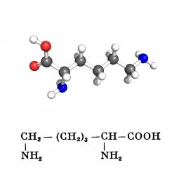 структурная и химическая формула лизина