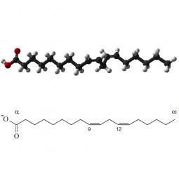 структурная и химическая формула жирных кислот омега-6