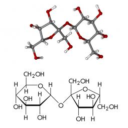 молекула и структурная формула сахарозы на белом фоне