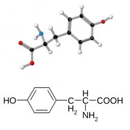 структурная и химическая формула тирозина