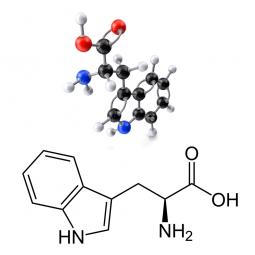 структурная и химическая формула триптофана