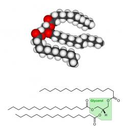 молекула и структурная формула жиров на белом фоне