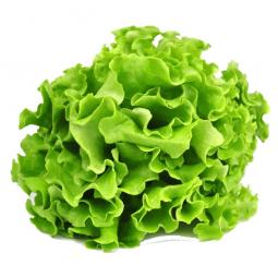 листья салата на белом фоне