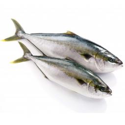 две сырые рыбы