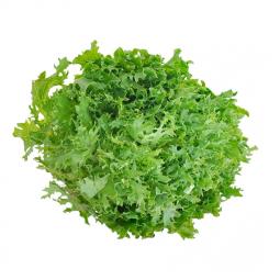 зеленые листья салата фриссе