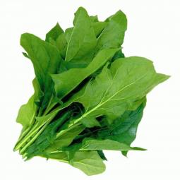 зеленые листочки щавеля с веточками