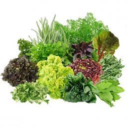 различные виды салатной зелени на белом фоне