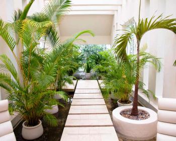 высокие пальмы в горшочках