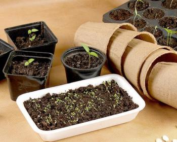 проросшие семена в горшочках, бумажные стаканчики