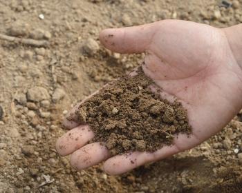глинистая почва в ладони