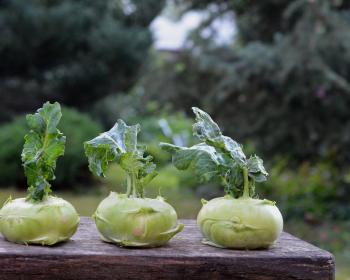 три капусты сорта кольраби