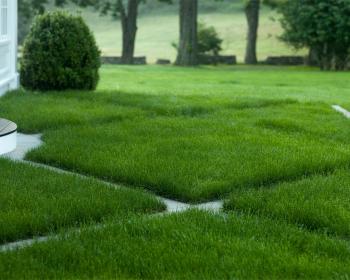 ухоженные газон на участке