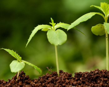 ростки растений в открытом грунте