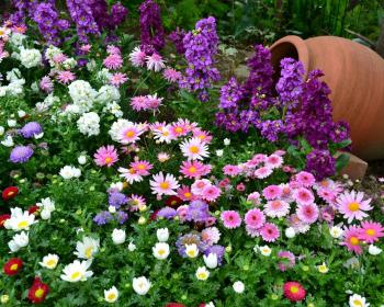 белые, розовые и фиолетовые цветы