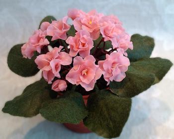 фиалка с розовыми цветками в горшке