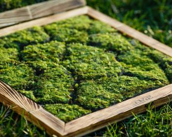 выращенный мох в клумбе