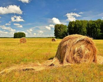 свернутые стоги сена на поле