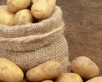 свежая картошка в мешке