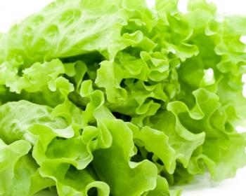 зеленые листья салата