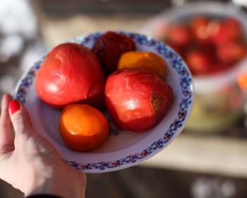 пять бочковых помидоров на тарелке