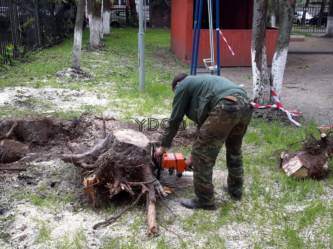 спиливание пня дерева